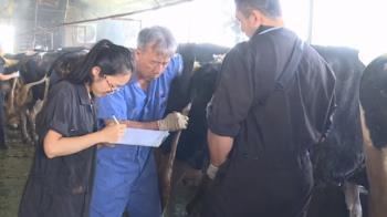 牛P顧問團出動 用預防醫學照顧乳牛健康