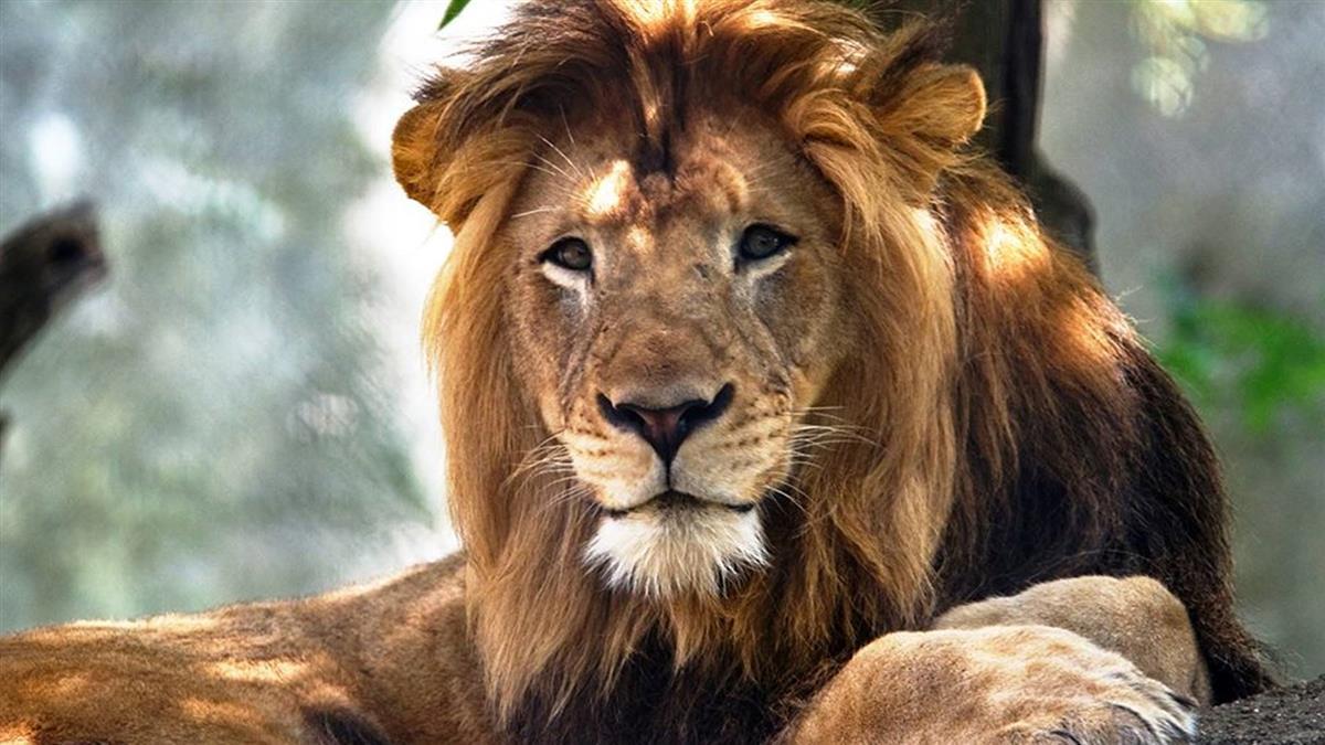 同居8年突弒夫!母獅暴走「勒死」3個孩子的爸