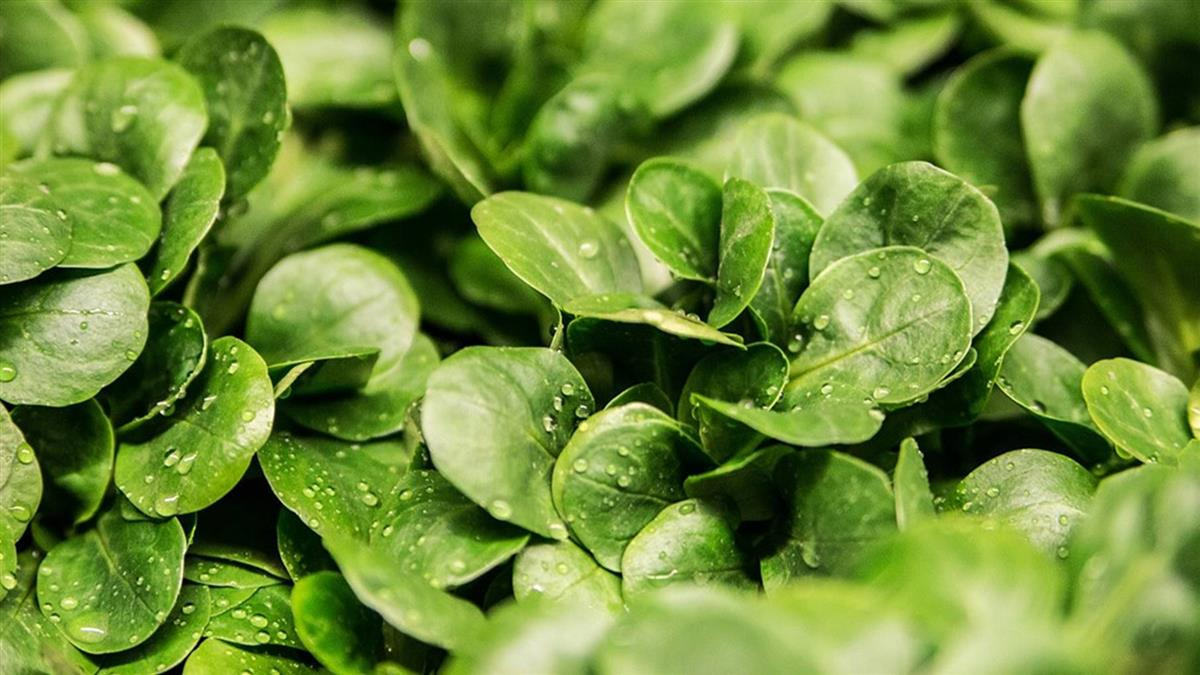 北市9月蔬果殘留農藥抽驗 不合格率11%