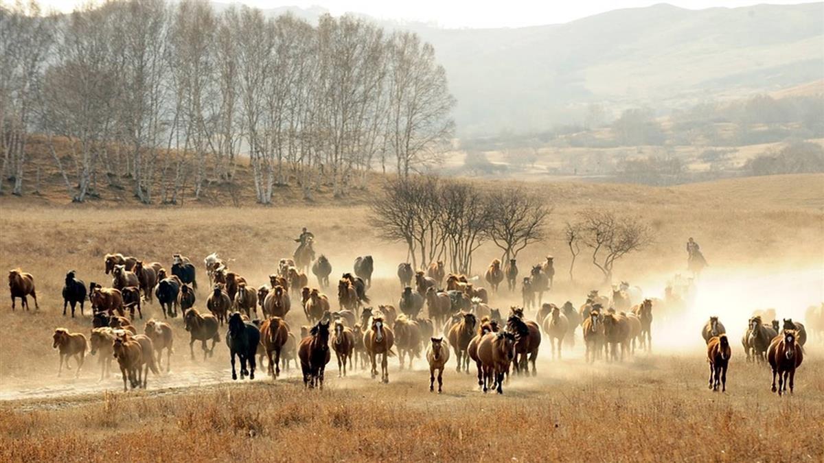 全球野生動物40年銳減6成 WWF疾呼化解滅絕危機
