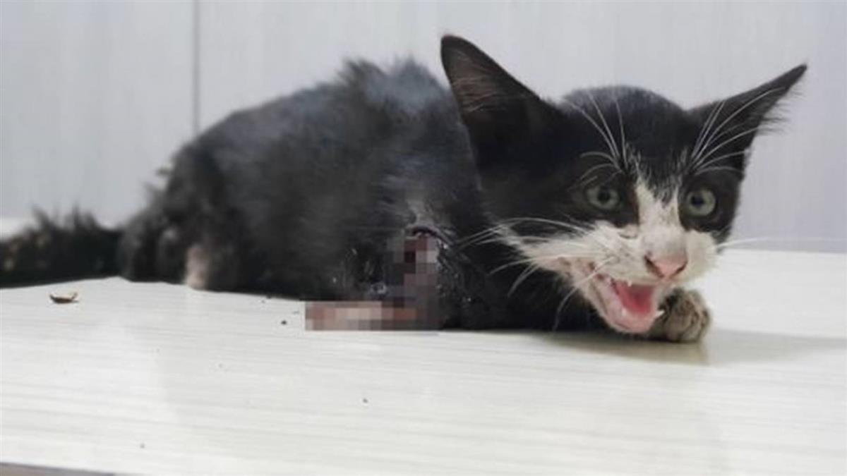 小貓疑遭擰斷前後腳 動保團體籲緝兇