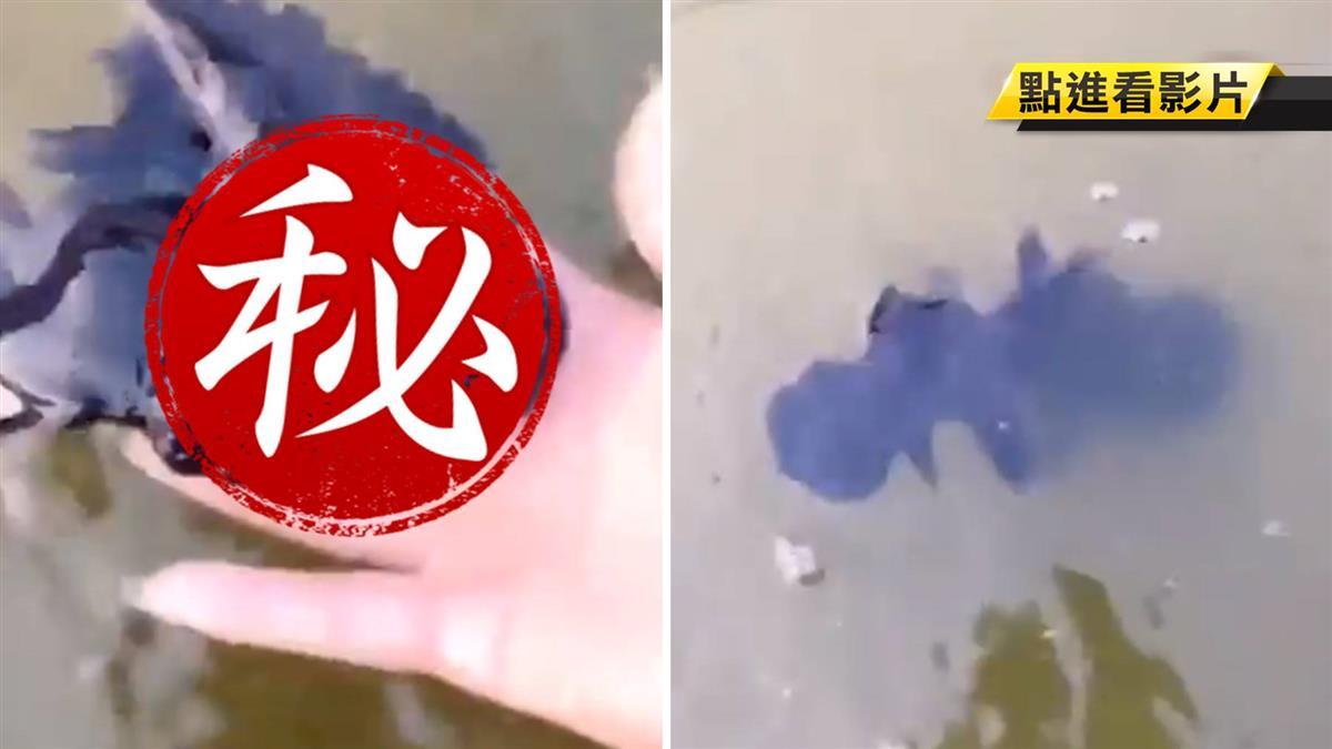 水中撈起「會游泳的黑莓」!網嚇壞:外星生物