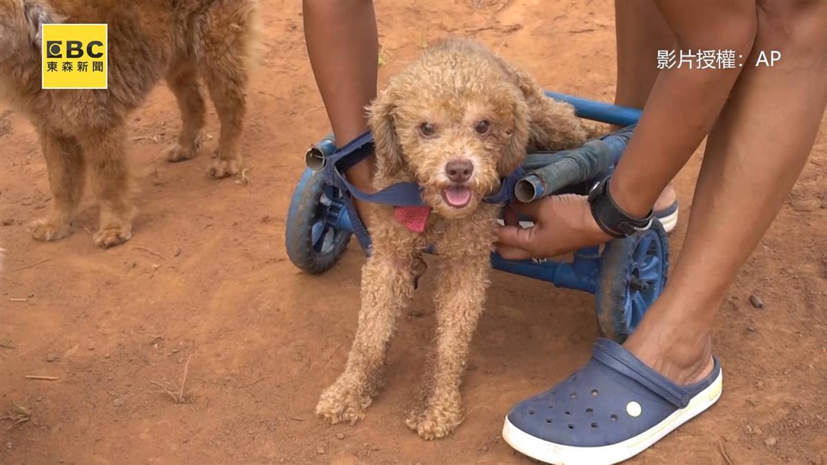 暖心!女工匠不棄癱瘓貓狗 自製輪椅助重新站起