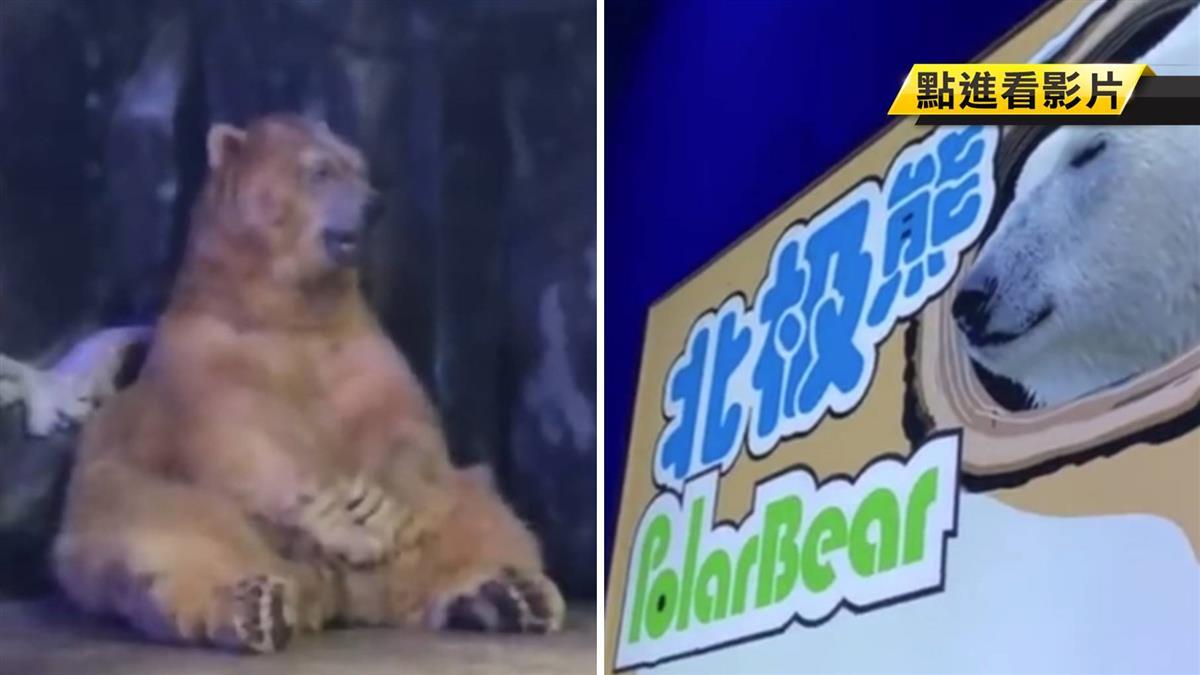 「棕熊」代班北極熊進冰櫃!凍到搓熊掌 狂打冷顫