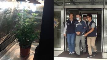 旅美歸國華裔種大麻 北市警破獲送辦