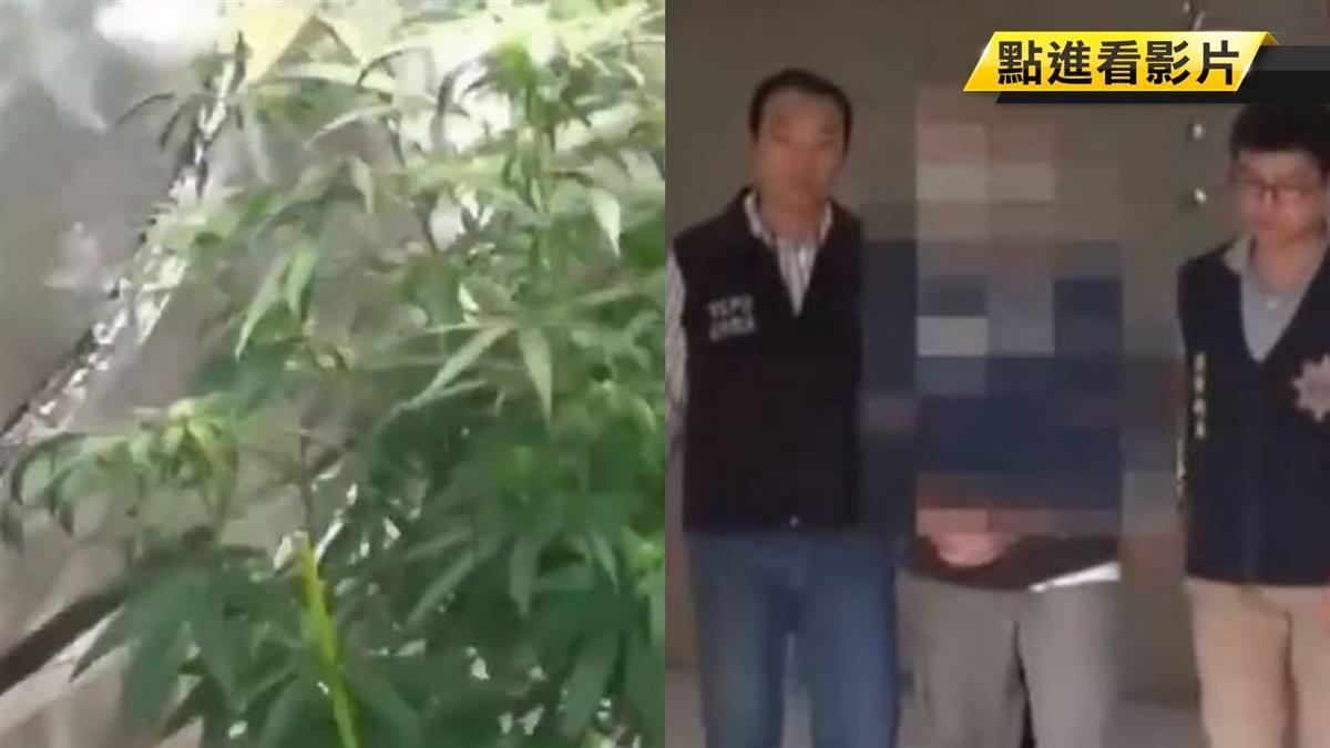 返台從軍曾獲表揚!美籍台裔男種大麻被逮