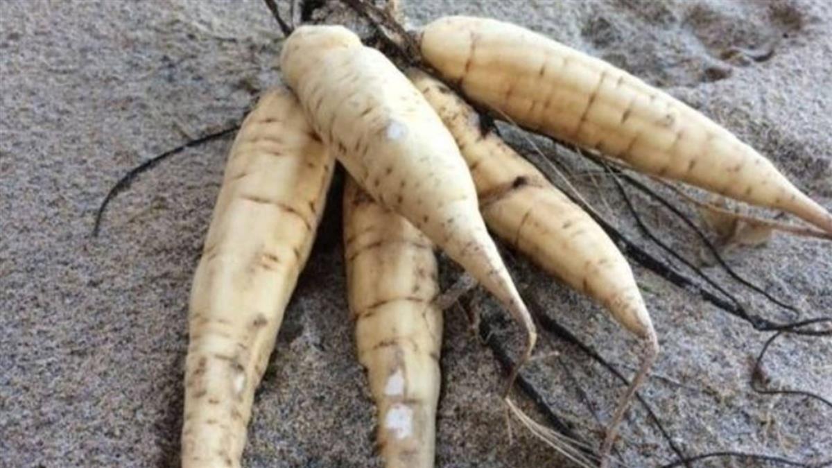 吃下一撮葉就要人命!「白蘿蔔」有劇毒?專家揭真相