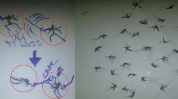 蚊子很多怎麼辦?神人畫出超狂插圖 網一看跪了