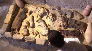罕見!古埃及「聖甲蟲」木乃伊出土 數十隻貓咪陪葬