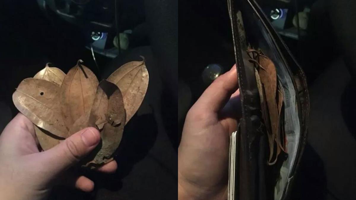 女乘客詭異笑…車費變8片乾枯樹葉!運將嚇到臉發白