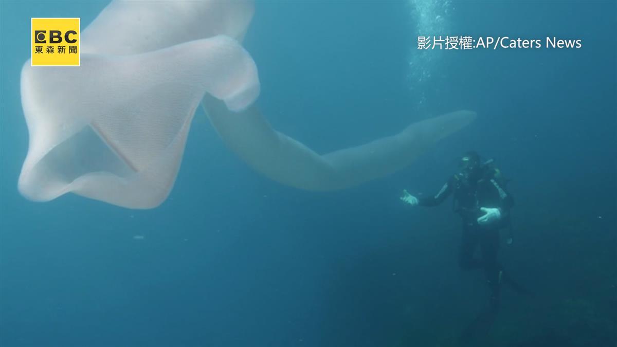 海怪現身?紐西蘭驚見8米巨型白蟲 嚇壞潛水客