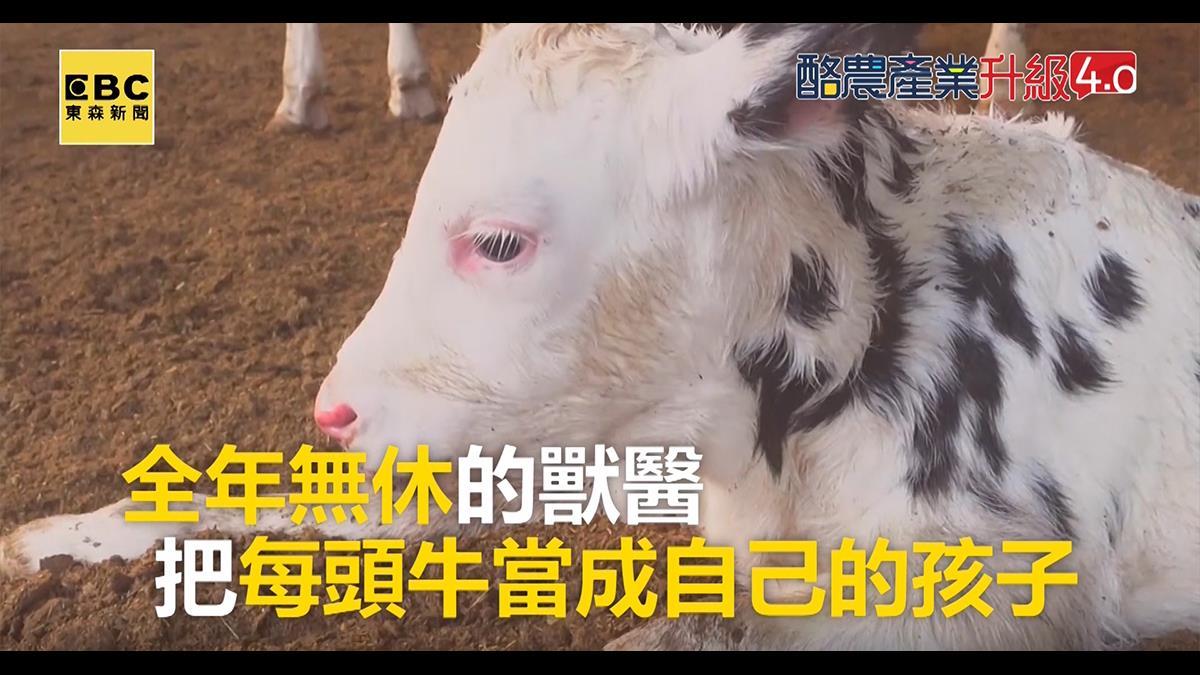 奉獻每一秒的青春 獸醫全年無休視牛如己出