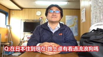 日本人揭密「沒流浪狗」原因...竟不是被撲殺?