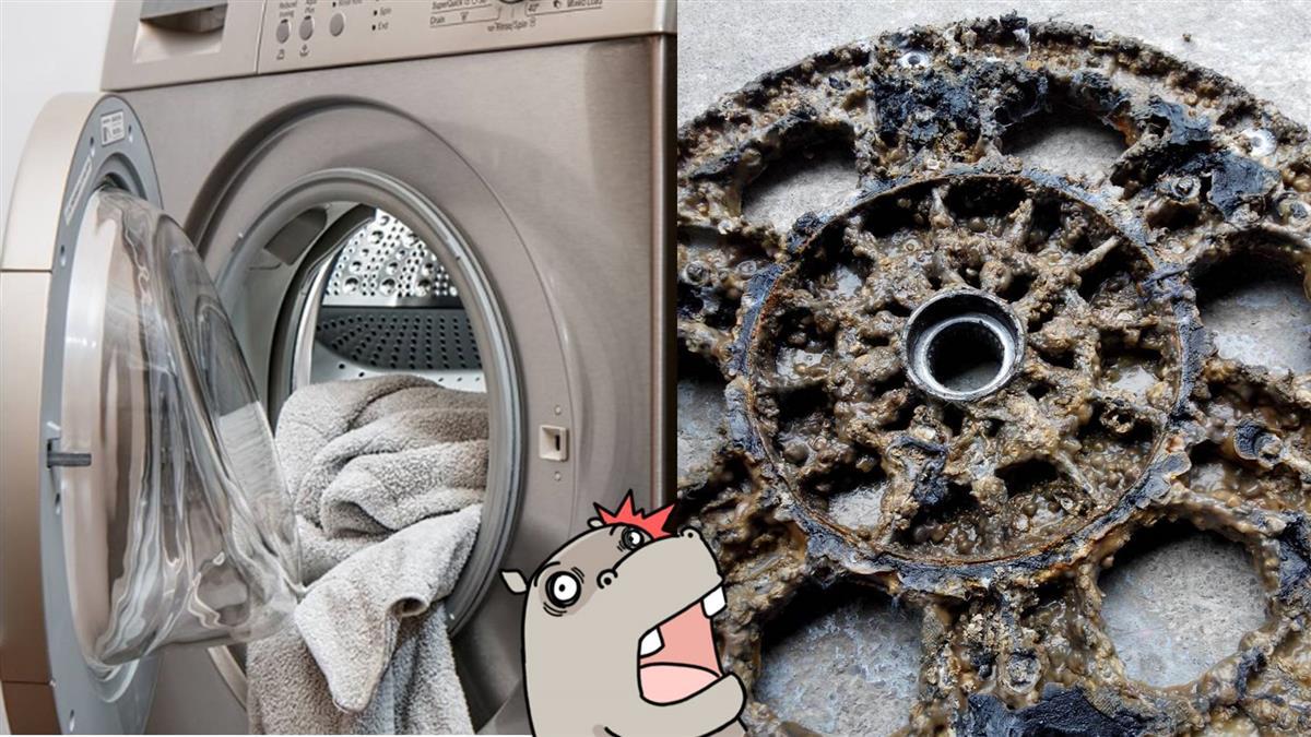 噁爆!他拆開洗衣機內部驚見「蛤蠣湯」 專家揭真相