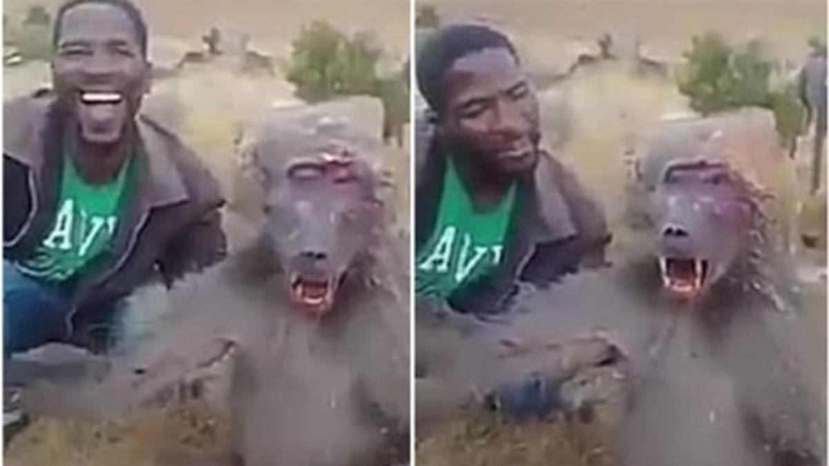 狒狒遭暴毆到重傷… 哀號喘氣!男拍片大笑問:痛嗎?