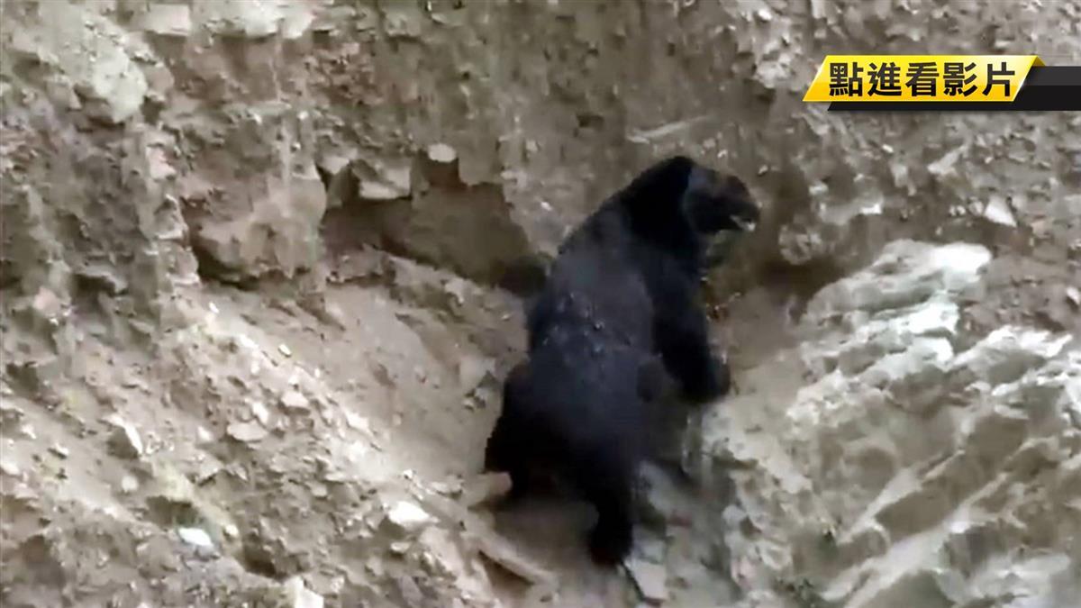 尋山見樹幹有爪!3秒後...台灣黑熊跳下 巡山員嚇逃命