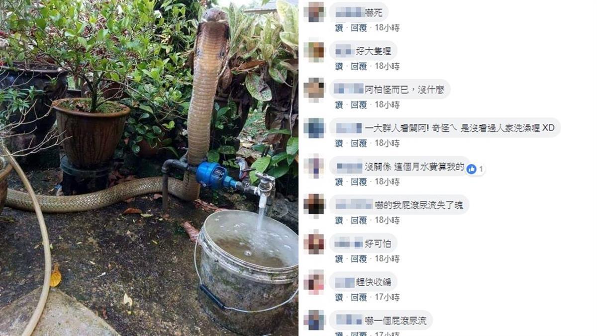 眼鏡蛇王站後院緊盯…桶中水溢出 他驚問:能幫忙關水