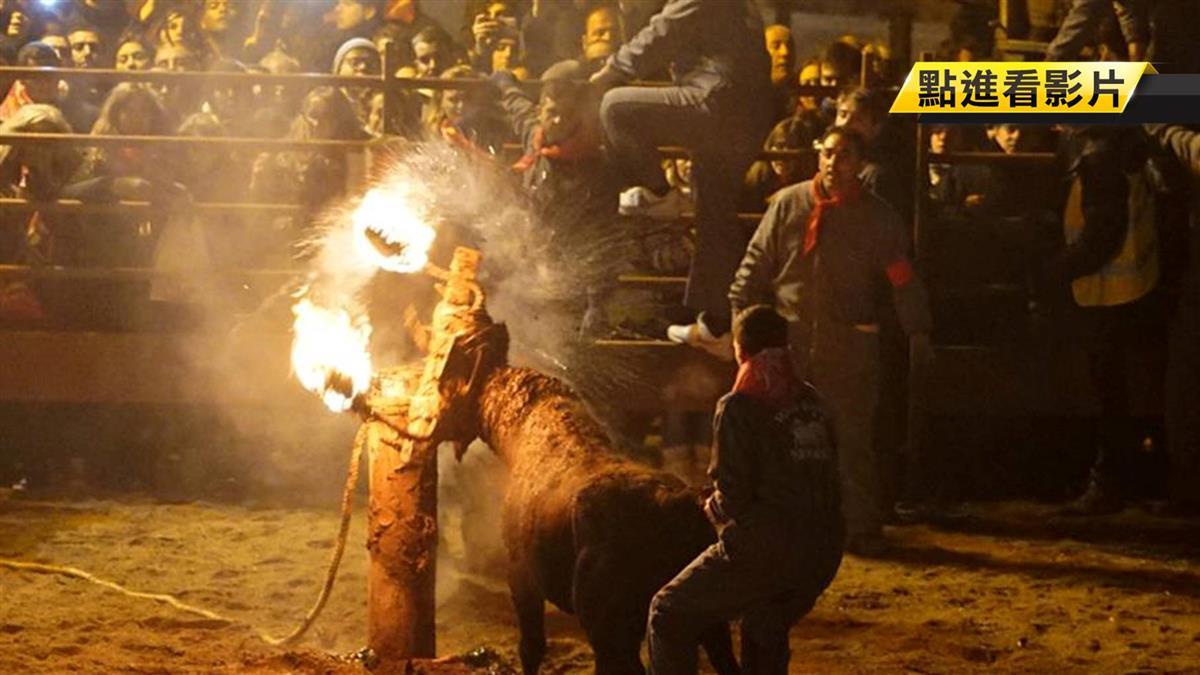 牛遭「綁火焚燒」狂奔數小時 眼燒乾!每年慘死3千隻