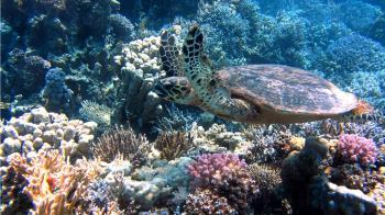 暖化延後迴游 大量海龜沖上麻州海岸凍死