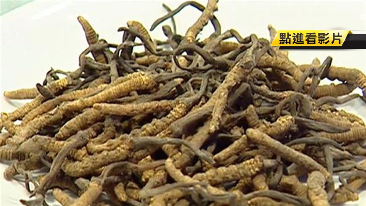 研究:冬蟲夏草菌絲 有抗發炎、減脂效果