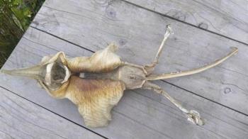 紐西蘭驚見外星遺骸?詭異生物「密麻尖牙」嚇壞民眾
