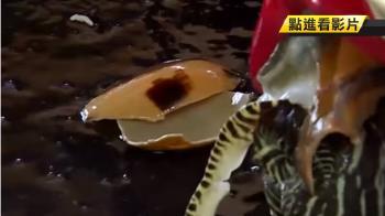 攤商「指螺為鮑」還狡辯 :在台灣螺肉就叫鮑魚