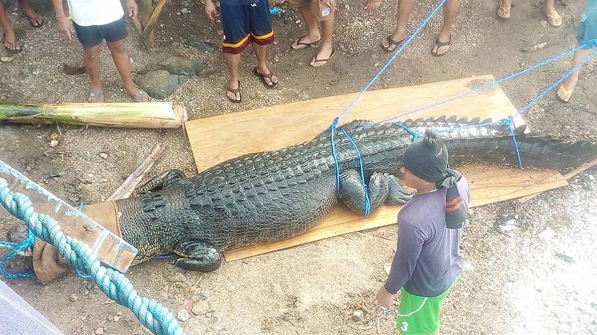 菲律賓捕獲475公分巨鱷 當局:可能吃過人