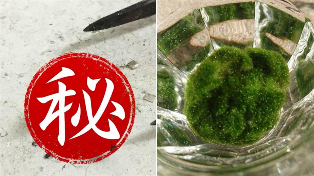 細心照顧6年…意外發現綠藻寶寶「真面目」讓他淚崩