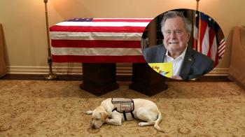 鼻酸!老布希辭世 忠犬趴靈柩前最後道別「任務完成」