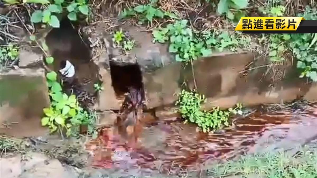 廢棄屋狂流「血水」!藏政府恐怖酷刑 45秒影片曝光