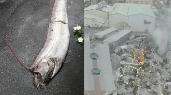 大災難前兆?日本驚現4.7公尺「地震魚」 網友嚇壞