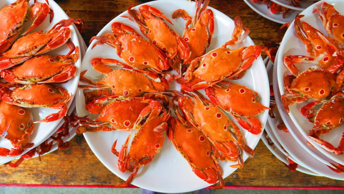 想吃海鮮不用到北海道 肥美萬里蟹北海岸就吃的到!