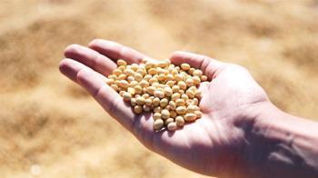 美證實大陸採買黃豆 但不確定是否收購更多