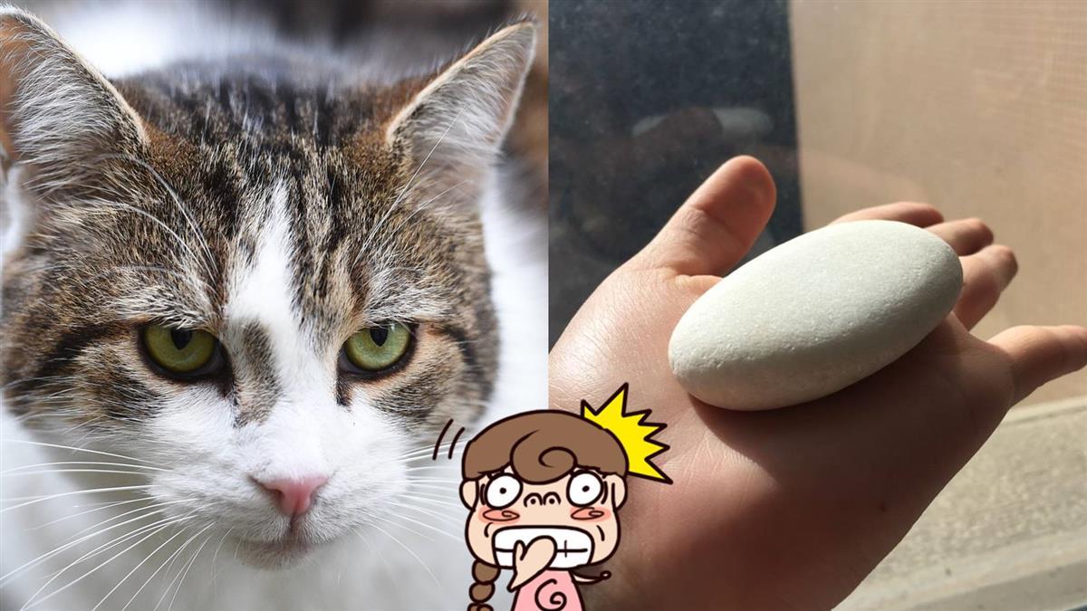 女大生想養貓…媽掏出「石頭寵物」網笑翻:求教學