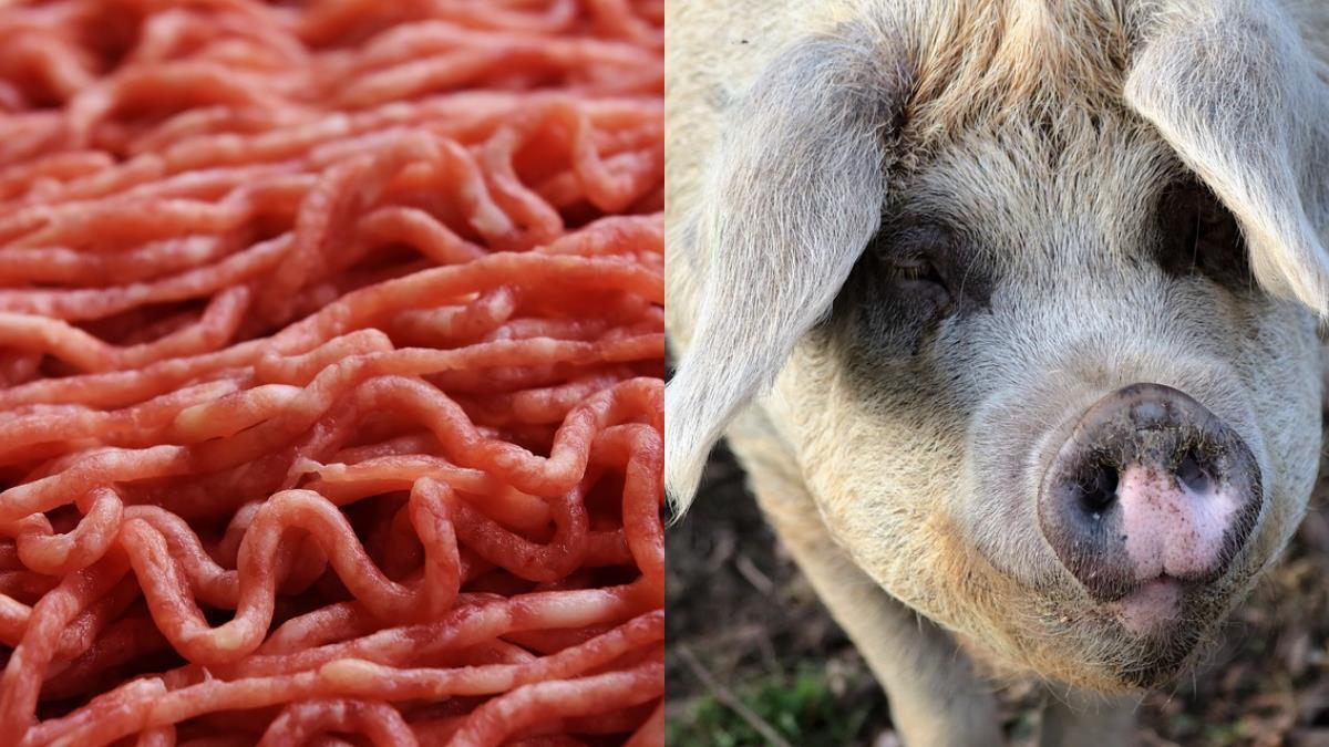 攜豬絞肉回台包湯圓  陸配遭罰20萬痛哭失聲