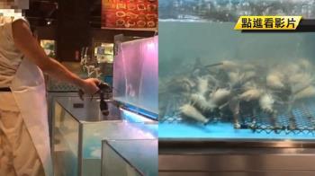 【獨家】水產店標榜活跳跳生鮮…泰國蝦池底全缺氧!
