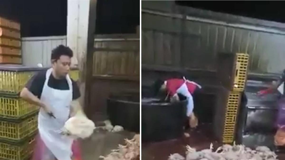 殘忍屠宰場!雞隻遭割脖浸水等死 220秒影片外流