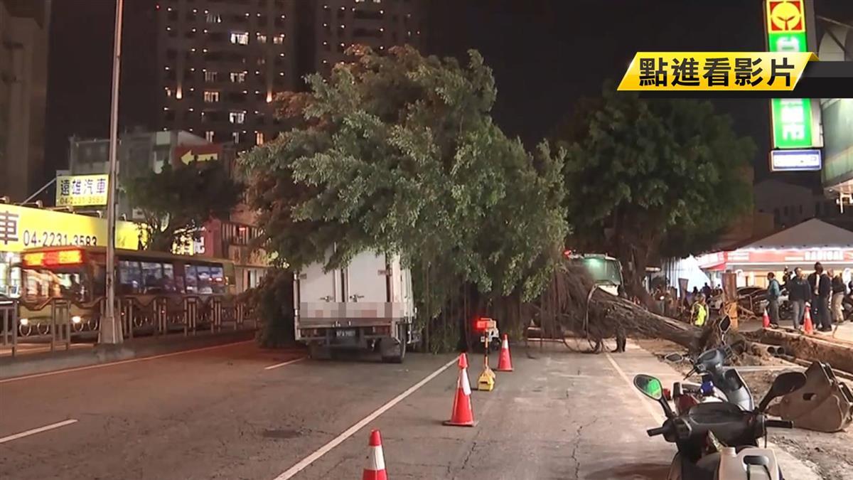 廠商施工誤挖路樹 3層樓高大樹倒下壓傷騎士