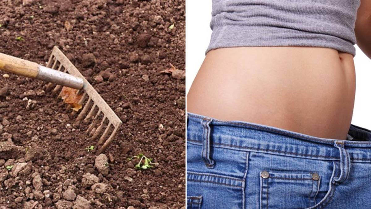 驚人!「吃土」能減肥?澳洲研究:能隔絕脂肪被吸收