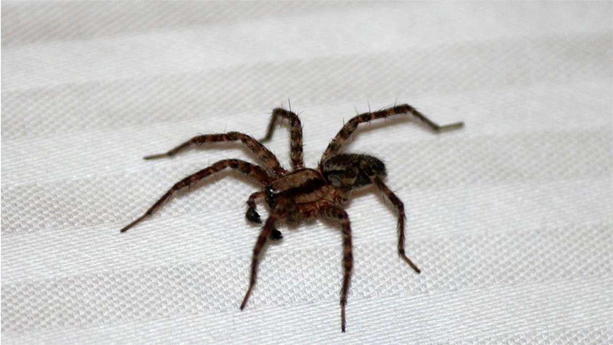 殺蜘蛛男尖叫大喊「怎麼不去死!」警察來了看傻眼