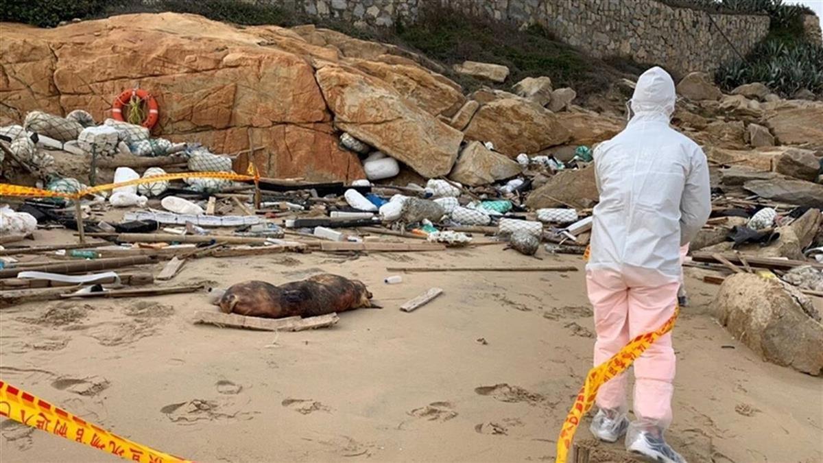 警戒!海漂豬染豬瘟 金門防疫所採5公里內養豬場檢體