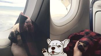 一路都沒叫!她偷帶「巴哥」搭飛機 真相曝光超驚人