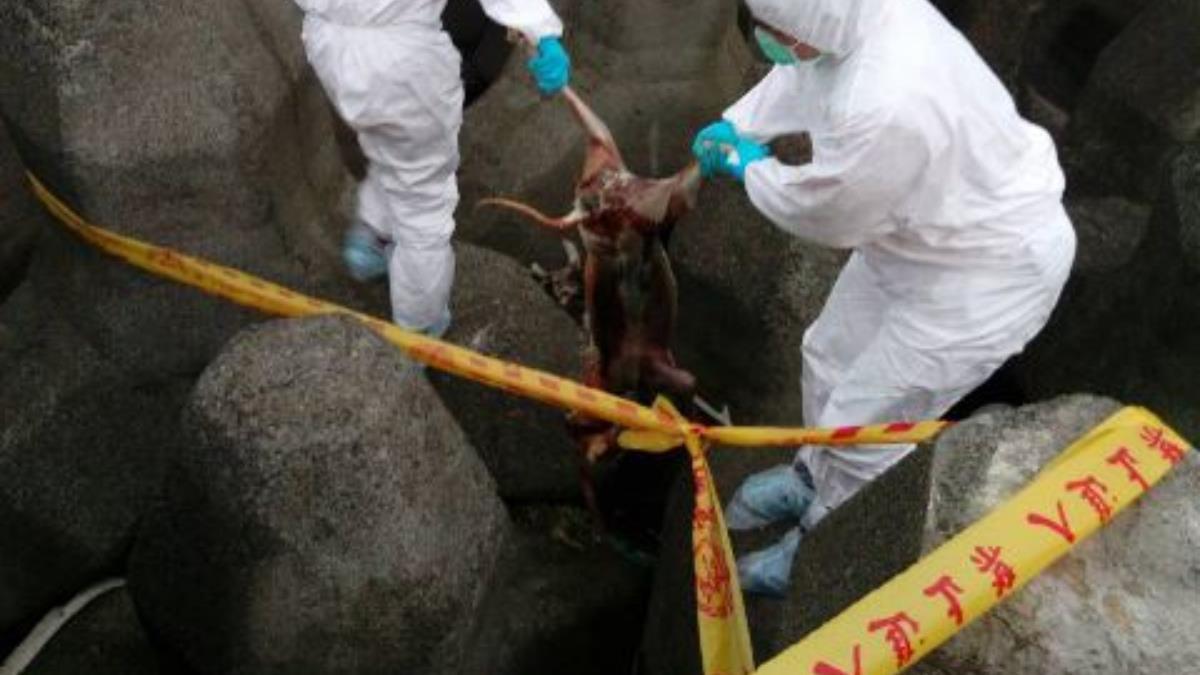 虛驚一場!新北金山海邊誤傳出現死豬 證實為狗屍