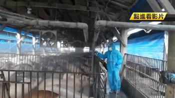 非洲豬瘟陸豬漂金門 學者:離島總有一天會淪陷