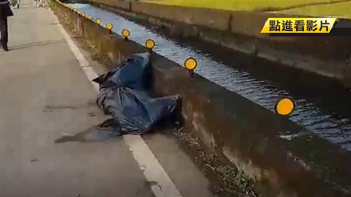 落雨松又見2死豬!初判無豬瘟感染特徵