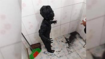 女廟前被車撞倒奇蹟站起 男童全身裹黑泥崩潰