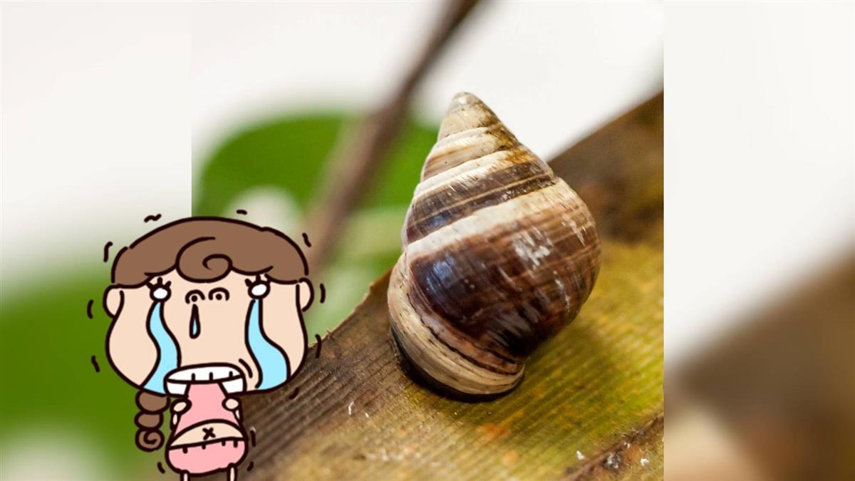 確定絕種!夏威夷這蝸牛「喬治」孤獨14年死亡…網淚崩