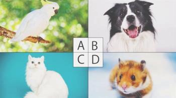 你像哪隻動物?4選1圖片揭「2019要該做出的改變」