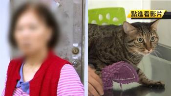 領養17隻貓狗都消失!婦人急認養貓 醫師查「她」是黑名單