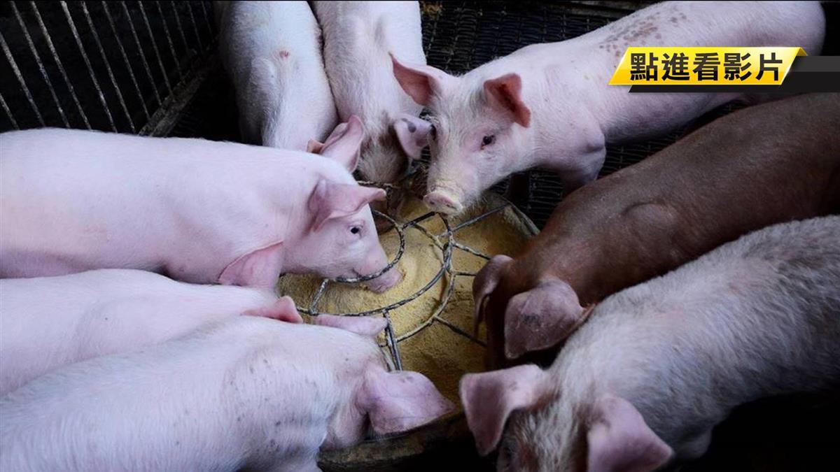 驚!防檢局抽驗包裹 又見豬瘟病毒